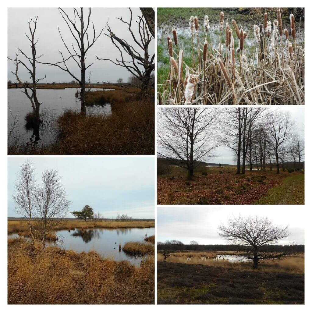 Dwingelderveld – Kraloo